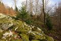 Herbstein Stockhausen Woellstein Outcrop Basalt c.png