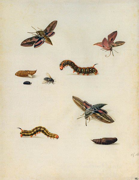 File:Herman Henstenburgh - Insects - WGA11370.jpg