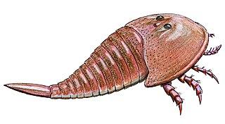 Mycteropoidea taxon