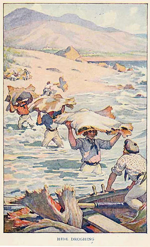 Two Years Before the Mast - California hide trade: droughing (carrying) hides from an Alta California shore to boat, for export