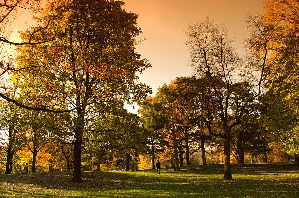 oaks at high park, toronto