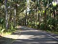 Highland Hammocks SP road02.jpg