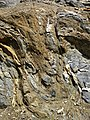 Highly convoluted gneiss (Archean; Norris South roadcut, Madison County, Montana, USA) 3 (45479835052).jpg