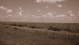 Hippo Valley Estate - A sugarcane plantation on the Hippo Valley estate land