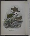 History of the birds of NZ 1st ed p114-2.jpg