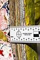 Holbeinpferdle Restaurierung jm95353.jpg