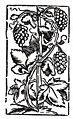 Holzschnitt einer Weinrebe.jpg