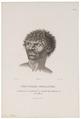 Homo sapiens - Aboriginal, Australië - 1700-1880 - Print - Iconographia Zoologica - Special Collections University of Amsterdam - UBA01 IZ19500021.tif