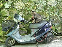 Honda Super Dio with cat.jpg
