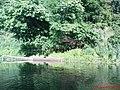 Hoper river, near the village of Big Melik, Хопер, Большой Мелик - panoramio.jpg