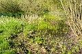 Horn-Bad Meinberg - 2015-05-04 - LIP-004 Naptetal (16).jpg