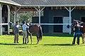 Horses in paddock.jpg