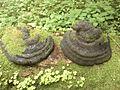 Hubiak pospolity w rezerwacie ścisłym Białowieskiego Parku Narodowego (1).jpg