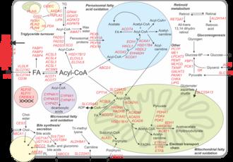 Peroxisome proliferator-activated receptor alpha - Human hepatocyte PPARalpha transcriptome