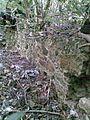 Hunthum's ghut ruin 03.JPG