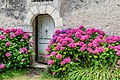 Hydrangea macrophylla in the park of the Castle of Selles-sur-Cher 03.jpg