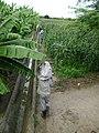 Ibimirim - PE. Entre o canal, cultivo da banana e do milho - em 12-07-2008 - panoramio.jpg