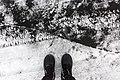 Ice on Fishhook Lake, Park Rapids, Minnesota.jpg