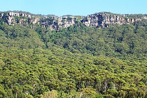Illawarra - Illawarra Escarpment above Austinmer, showing Hawkesbury sandstone, Rainforest and Eucalyptus forest.