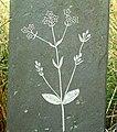 Image of centaury carved on slate fence, Penlon car park. - geograph.org.uk - 356287.jpg