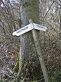 In Bighton Wood - geograph.org.uk - 375000.jpg
