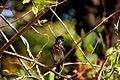 Ind bird.jpg