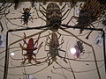 Insect Safari - insect 28.jpg
