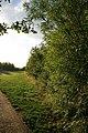 Inside Orchid Wood - geograph.org.uk - 871212.jpg