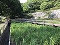 Iris Garden of Maizuru Park.jpg