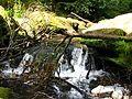 Irrel Wasserfälle 09.jpg