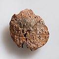 Jar sealing impressed with name of Queen Neithhotep MET 20.2.54 EGDP022698.jpg