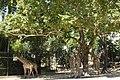 Jardim Zoológico de Lisboa 2017 03.jpg