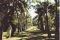 Jardin de Pamplemousses (3001700238).jpg