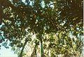 Jardin de Pamplemousses (3001708460).jpg