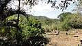 Jardin en las Chaguaramas - panoramio.jpg
