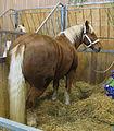 Jielbeaumadier cheval agr paris 2013.jpeg