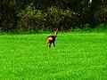John Deer - panoramio.jpg