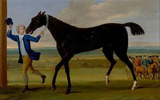 The Duke of Rutland's Bonny Black