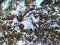Julie's Tree (2118591094).jpg