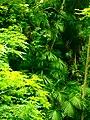 Jungle in europe enhanced.jpg