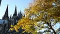 Kölner Dom im goldenen Herbst.jpg