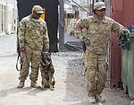 KAF service members help train military working dogs 140319-Z-TF878-576.jpg