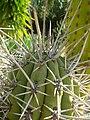 Kaktus 0641.jpg