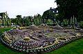 Kaktusplant12.jpg