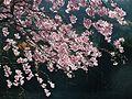 Kasai Tamaoka Historic Park 玉丘史跡公園 DSCF6577.JPG