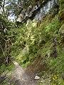 Kepler Track, New Zealand (10).JPG