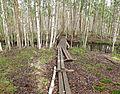 Keskisenlampi nature trail.jpg