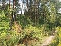 Kharkiv Botanical Garden 05.jpg