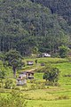 Kipaku Sabah Residential-buildings-and-rice-paddies-02.jpg