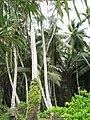 Kiribati(119).jpg